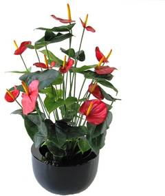 Anthurium Deluxe kunstplant 80 cm rood