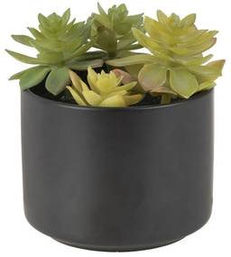 Vetplant in keramiek potje - zwart - 7,5 cm hoog